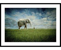 Stormposter Inramad Poster Elephant Follow Me